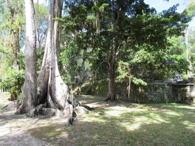 Tikal & Mexico